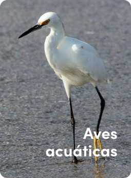 aaves2